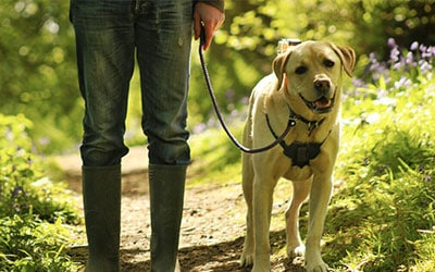 Dog Walking Services in CT