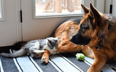 Pet Sitting Services in CT