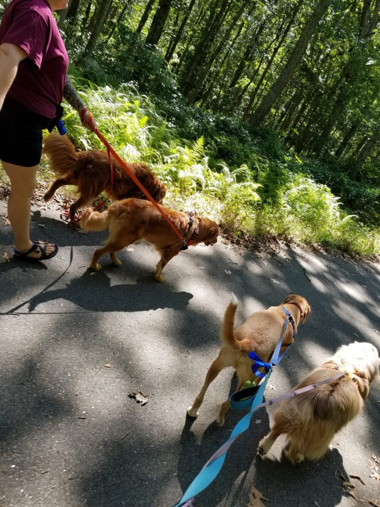 Pack hikes with Barks and Recreation