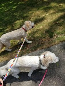 Barks and Recreation Walking dogs