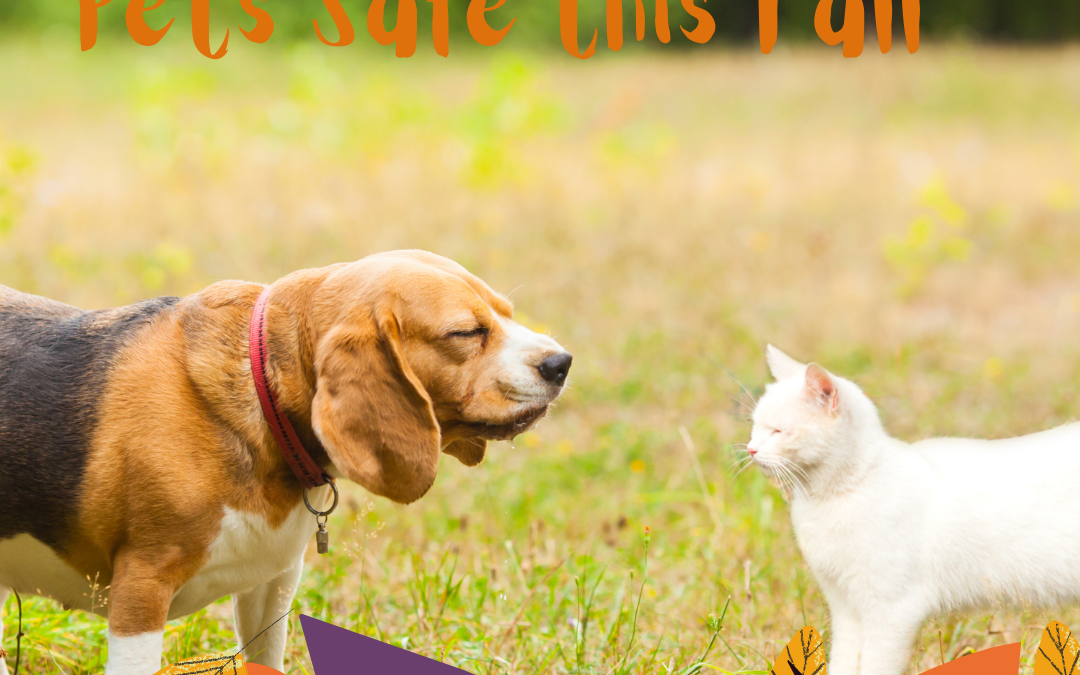 Pets Safety Tips for this Fall