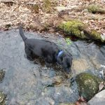 Wyatt taking a dip at Upper Three Mile Preserve