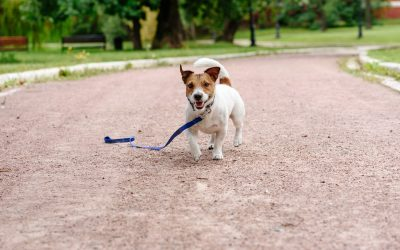 First Five Things to Do If Your Dogs Lost In CT